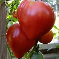 Семена томата Бычье Сердце красное 30 семян