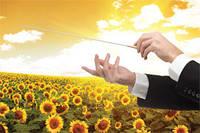 Семена подсолнечника Сингента Опера ПР (семена подсолнечника опера)