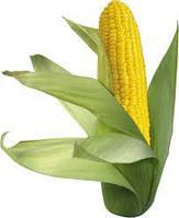 Семена кукурузы Аншлаг Маис