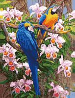 Картина по номерам Роспись на холсте Яркие попугаи КН1055 40*50 см