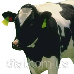 Концентраты и компоненты для производства заменителей молока (ЗМ)