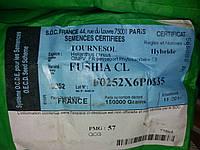 Семена подсолнечника ФУШИЯ под ЕвроЛайтинг. Гибрид Фушия устойчив к гербициду Евролайтинг. Франция