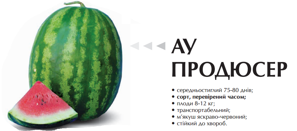 Семена арбуза  Ау Продюсер 50 грамм Agri Saaten