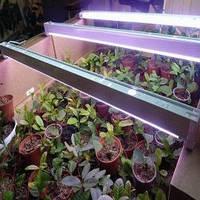 Светильник балка 36 Вт + лампа для растений и аквариумов Osram Fluora 36 Вт фитолампа