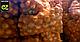 Семена лука Саманта F1 \ Samantha F1 250 000 семян Enza Zaden, фото 5