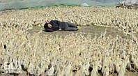 Цыплята, индюшата, утята и гусята. Производитель. Доставка по Украине.