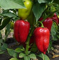 Успешное выращивание перца