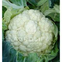 Семена цветной капусты Новария 2500с