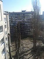 Санитарная обрезка деревьев., фото 1