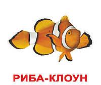 """Карточки большие украинские с фактами """"Мешканці водойм"""" 20 карт., ламин.,в пак. 16,5*19,5см,"""