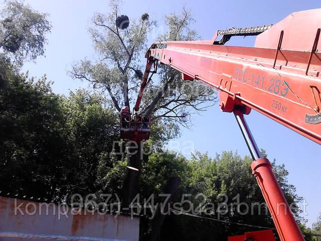 Зріз аварійного дерева