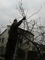 Обрезка деревьев.