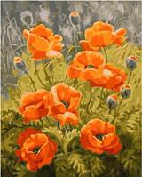 Картина для рисования SW023 Полевые маки худ Шумакова Елена (40 х 50 см) Турбо