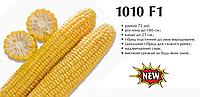 Семена кукурузы LS 1010, 25000 семян Lark seeds