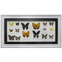 Картина «Коллекция бабочек»