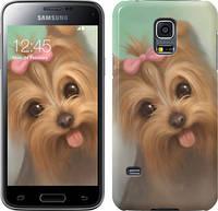 "Чехол на Samsung Galaxy S5 mini G800H Нарисованный йоркширский терьер ""928u-44"""