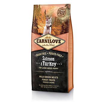Сухой корм Carnilove Adult Large Breed&Turkey лосось и индейка для щенков крупных пород, 12 кг