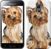 """Чехол на Samsung Galaxy S5 mini G800H Йоркширский терьер с хвостиком """"930u-44"""""""