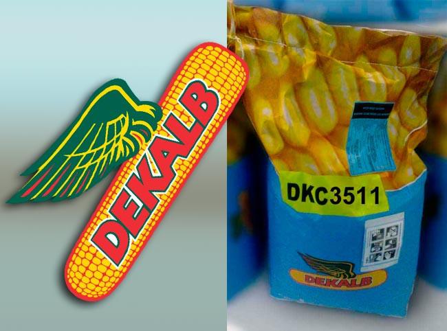 Семена кукурузы Монсанто ДКС 3511 (Monsanto)