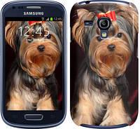 "Чехол на Samsung Galaxy S3 mini Йоркширский терьер ""929c-31"""