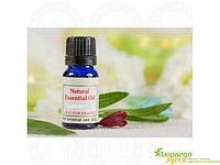 Эфирное масло Эвкалипта 10 мл. Песня Индии, R-expo Song of India Essential Oil Eucalyptus, Аюрведа Здесь