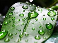 MultiChem. Прилипач AgroChem 90, 10 мл. Прилипатель для растений, для гербицидов.