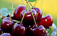 MultiChem. Консервант плодів ConFruit, 5 л. Консервант плодов, антитранспирант фруктов и ягод.