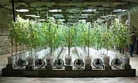 Гидропонные фермы в бомбоубежищах Лондона.