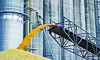 Украина уходит с азиатского рынка пшеницы
