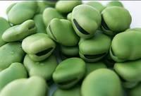 MultiChem. Фарба для насіння зелена, ColorSeed, 1 кг. Краска для семян, инкрустации семян.