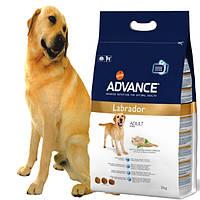 Advance Labrador сухой корм для взрослых собак породы лабрадор 12кг