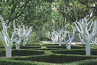 MultiChem. Побілка садова біла (1:9), ConHare, 1 кг. Побелка деревьев, побелка сада.