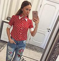 Рубашка красная в горох с воротничком ,короткий рукав