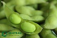 Семена сои Кардифф (Заатбау)