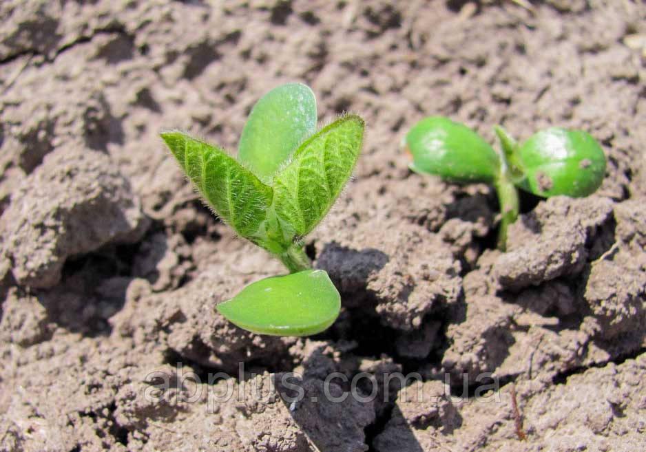 Семена сои Синара Danube Agro