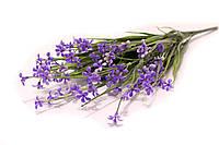 Всенние мелкие цветочки (фиолетовые)