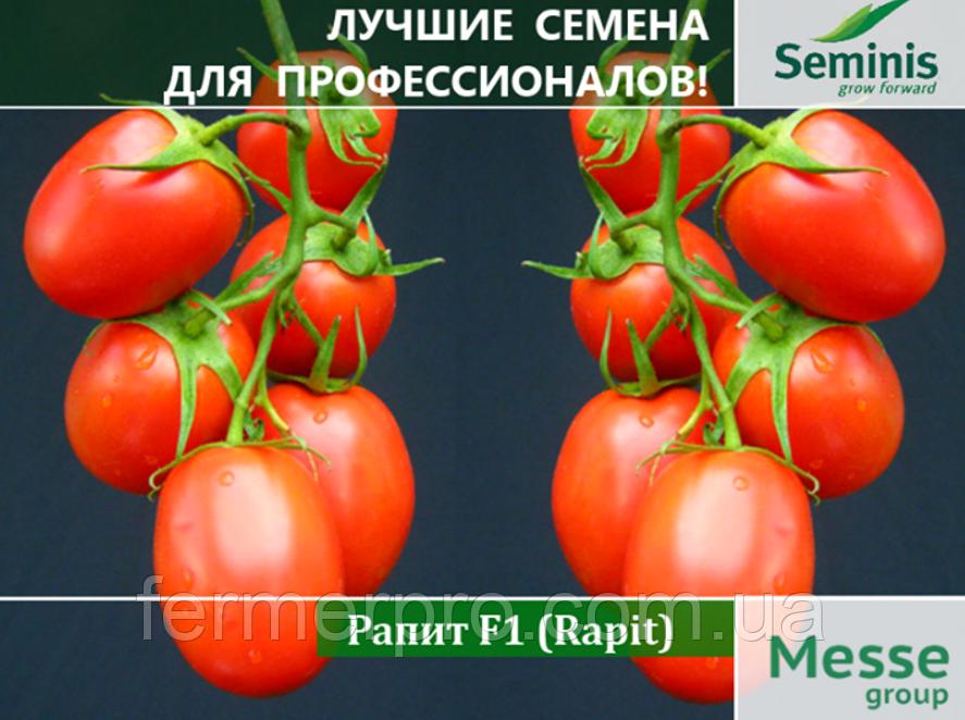 Семена Томата Рапит F1 \ Rapit F1 1000 семян Seminis