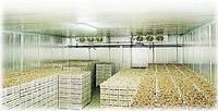Строительство зернохранилищ и овощехранилище, фруктохранилище