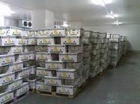 Строительство Камера хранения овощей и фруктов мяса, рыбы