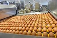 Строительство Склада для хранения яйца