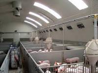 Строительство помещения для воспроизводства свиней
