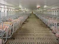 Реконструкция, ремонт помещения для воспроизводства свиней
