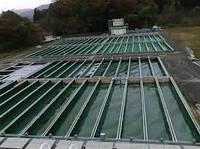 Строительство Прудовое хозяйство с перерабатывающим комплексом