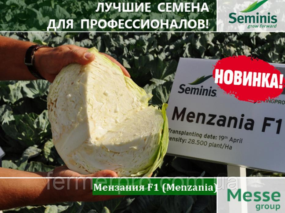 Семена капусты Мензания F1 \ Menzania F1 2500 семян Seminis