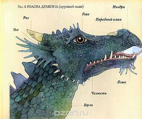 Драконоведение. Все о драконах, фото 2