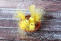 Цыплята в гнезде с перышком
