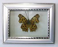 """Бабочка в рамке (3"""" 11*8.5CM)"""