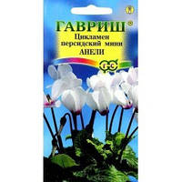 Семена Цикламен персидский мини Анели белый с красно-фиолетовым глазком 3 сем  Гавриш