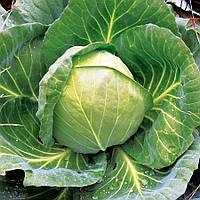Семена ультраранней капусты 45дней Арклайт F1, сорт белокачанный (2 500шт), головка 0,8 - 1,2кг