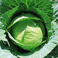 Семена ранней капусты 50дней Эридана F1, сорт белокачанный (2 500шт), головка 0,9 - 1,2кг